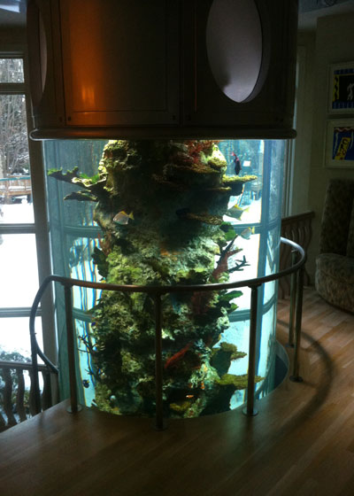 world class fish tank